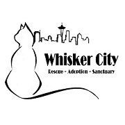 Best 3 Whisker City Cat Tree, Condo & Tower In 2021 Reviews