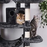 Best 5 Cat Climbing, Activity & Play Towers & Trees Reviews