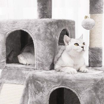 Bewishome Cat Tree Condo review