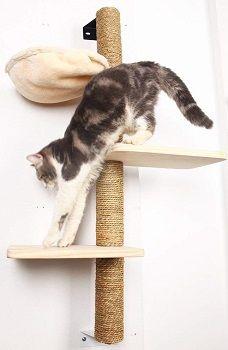Big Nose Cat Tree review