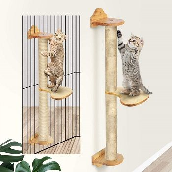 Fukumaru Cat Activity Tree