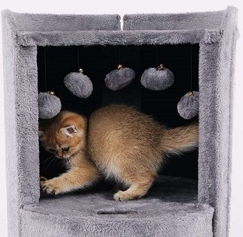 Lazy Buddy Cat Condo review
