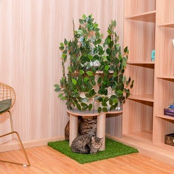 cat-tree-with-leaves