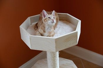 Armarkat Solid Wood Cat Tree Condo review