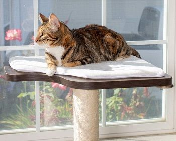 PetFusion Cat Scratching Post For Large Cats review