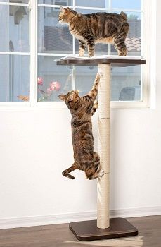 PetFusion Cat Scratching Post For Large Cats