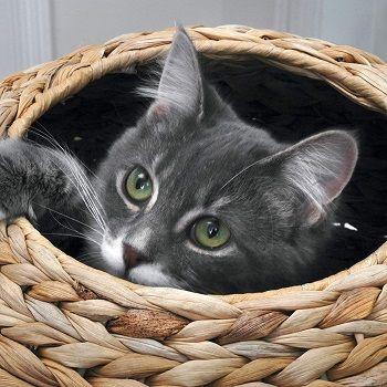 Sauder Natural Sphere Cat Tower review