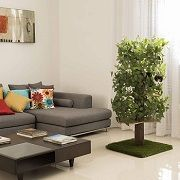 Top 5 NaturalReal Wooden Cat Tree & Tower Furniture Reviews